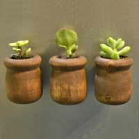 mini succulent planter refrigerator magnets
