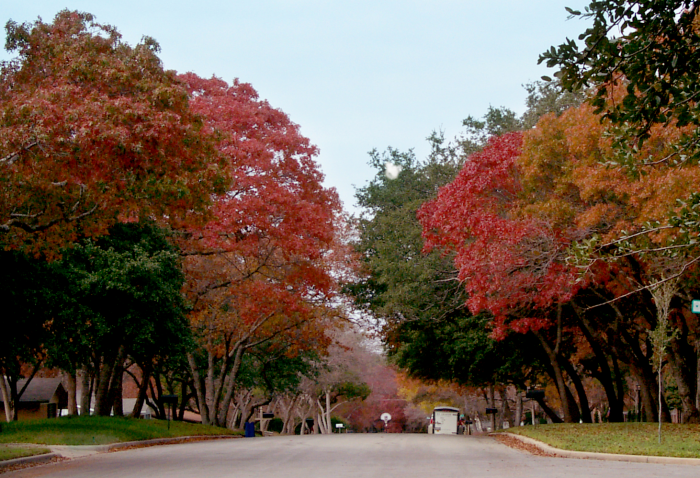 Colorful trees in fall in Texas