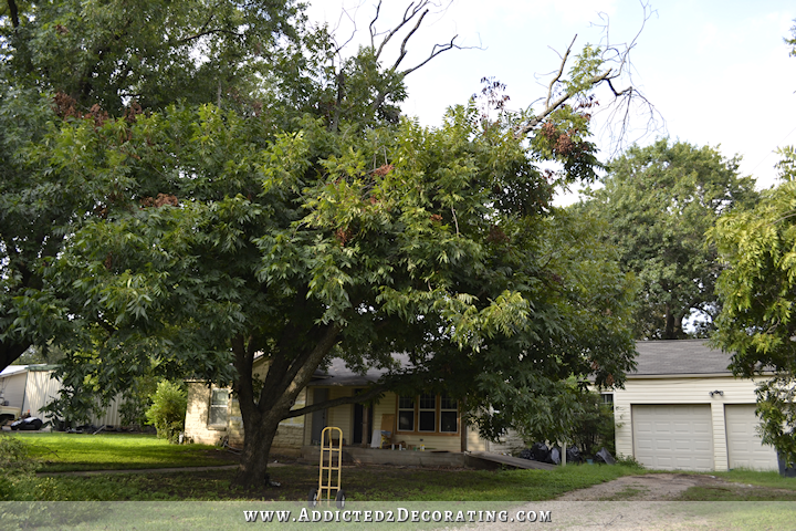 The pecan tree is gone for The pecan house
